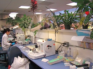 medical lab queens ny