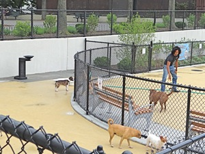 dog run in sunnyside dog parks in queens